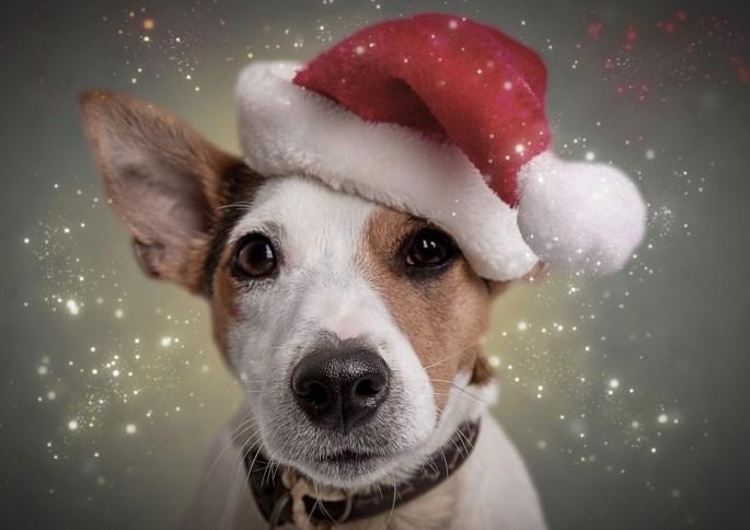 Christmas Card Mini-Sessions