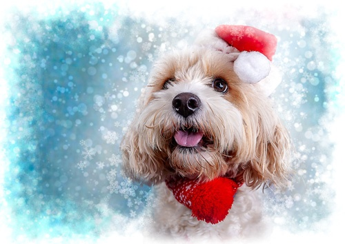 Benji Christmas Card