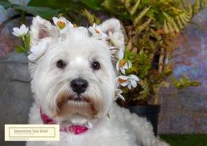 Win A Pet Photo Shoot