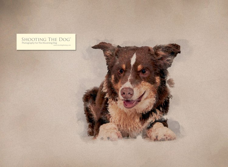 water colour - dog