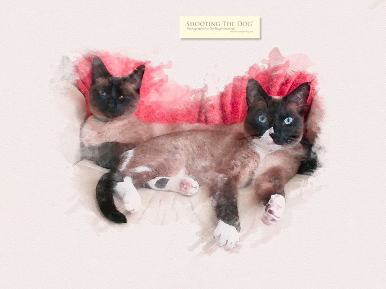 water colour - cats