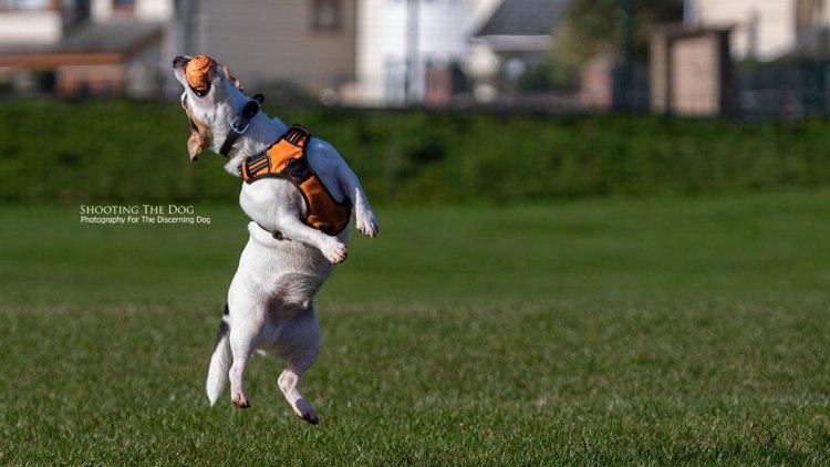 Dog Photography Enquiry