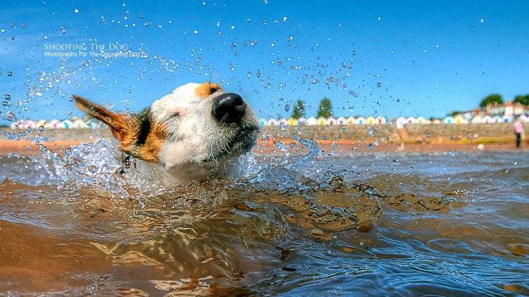 Beach photography: Dog Photography Brixham Torbay
