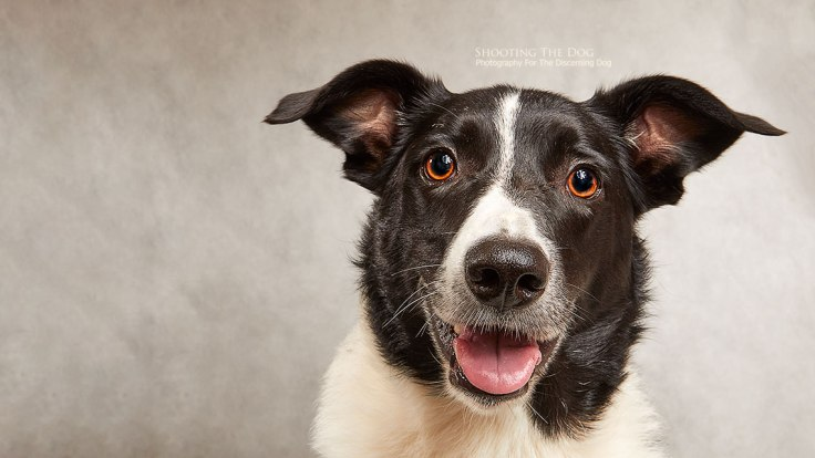 Dog Photography Services