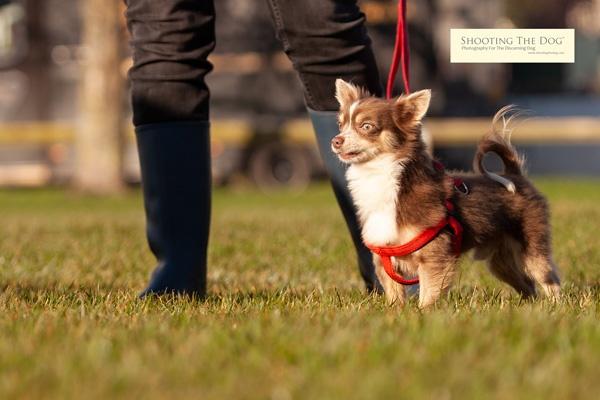 The Dog Walk Gallery
