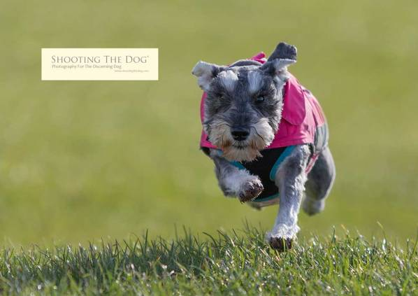 Dog Photography Brixham Torbay Devon