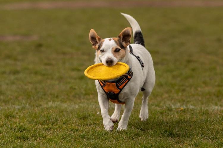 Fidget's Top Picks - Frisbees