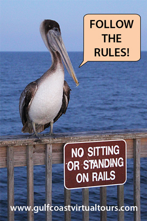 follow the rules
