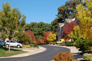 Autumn in my old neighborhood in Potomac, MD, a suburb of Washington D.C.