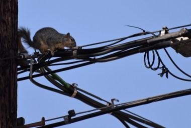 Squirrel-DSC_6304