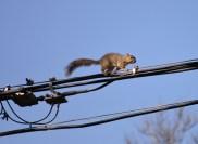 Squirrel-DSC_6309