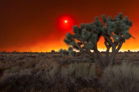 Day Venture – Alien Scenery of the Bluecut Fire
