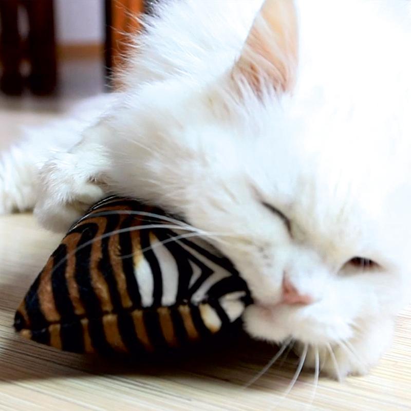 Wildlife Spielrolle von 4cats mit Katze