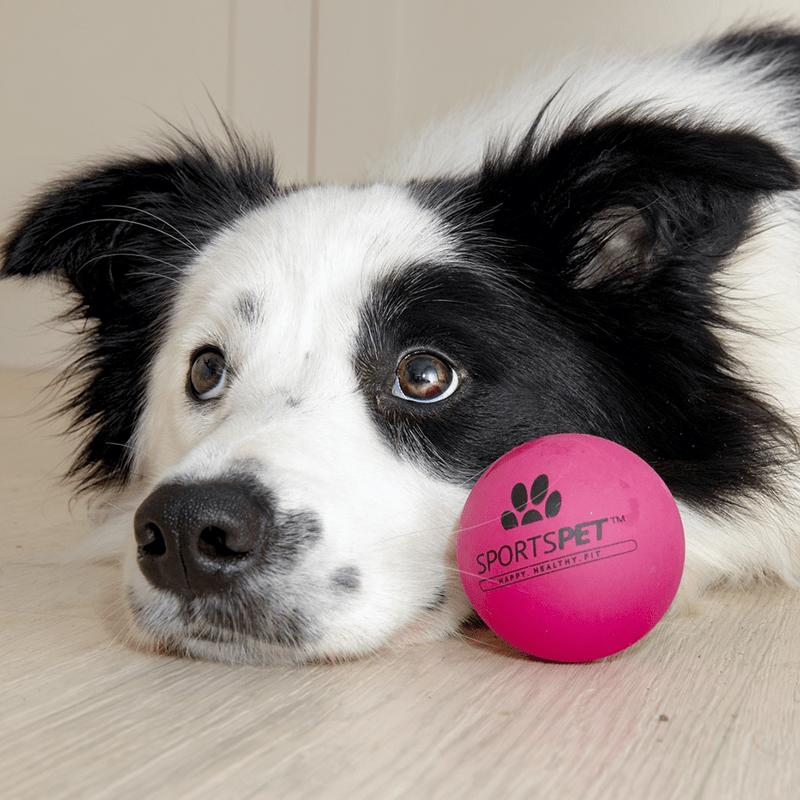 Hund mit pinkem AIRBALL 70 mm von SPORTSPET