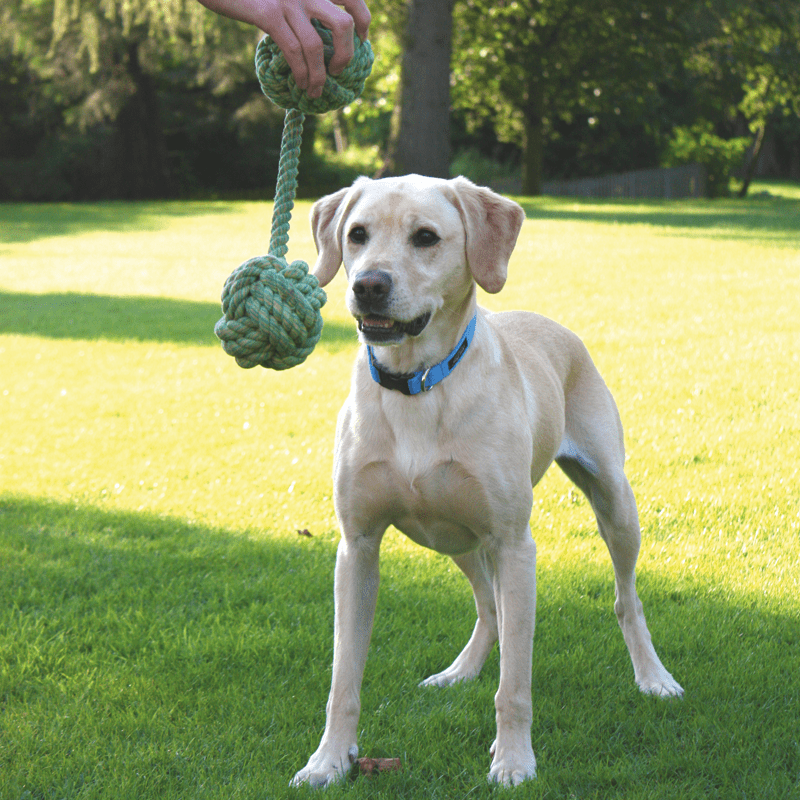 Nuts for Knots Doppelball von Happy Pet mit Hund
