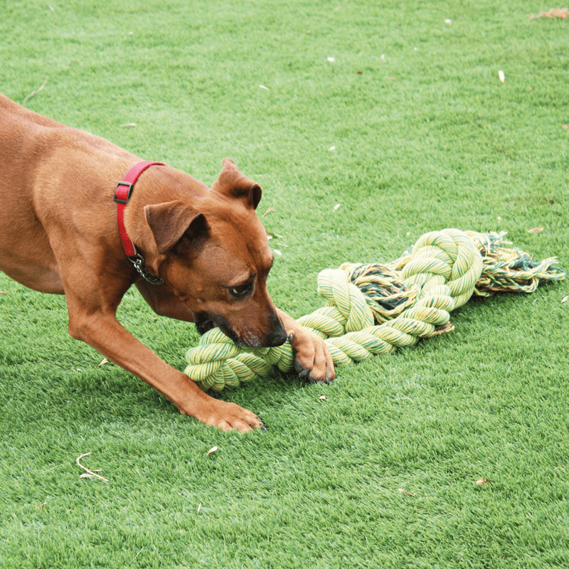 Nuts for Knots Kingsize Schleppseil von Happy Pet mit Hund