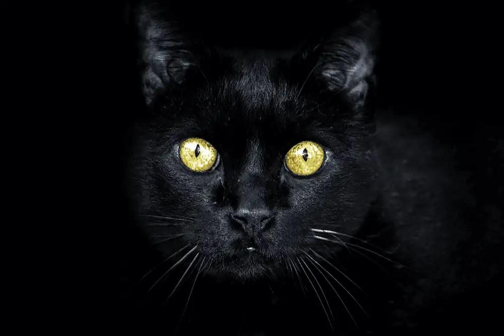 Schwarze Katze mit grünen Augen auf schwarzem Hintergrund