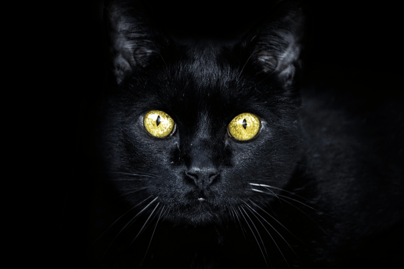Black cat with green eyes on a black background
