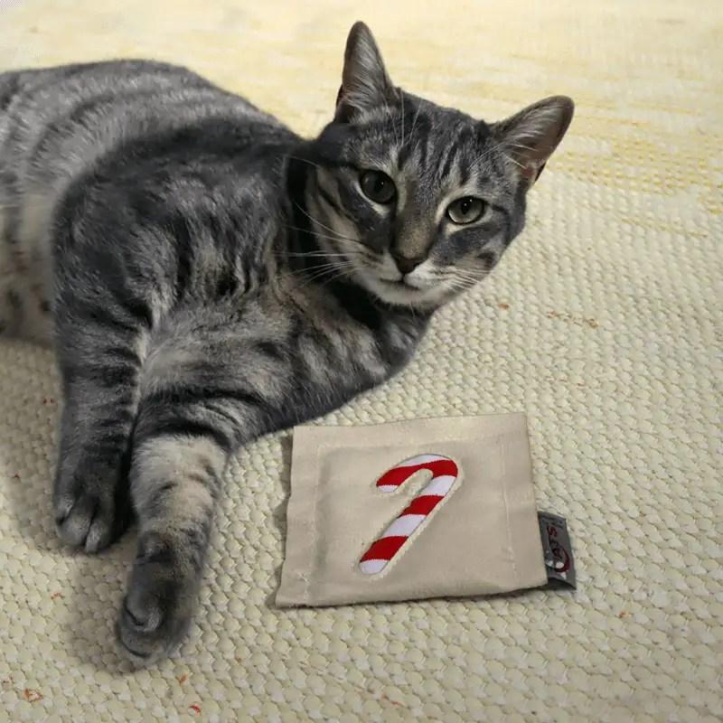 X-Mas Motivkissen von 4cats mit Katze