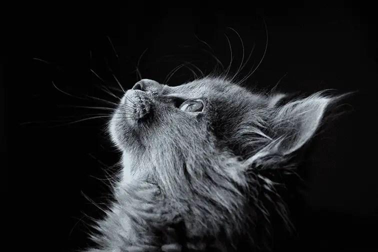 Katze hält inne