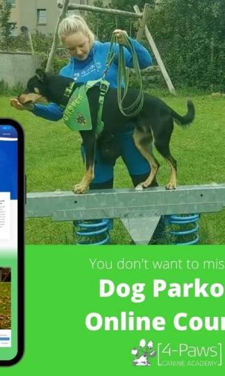 dog parkour online course