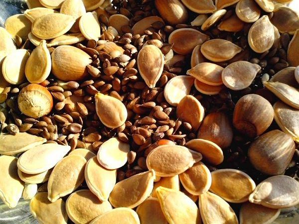 Lebensmittel #5: Nüsse & Samen