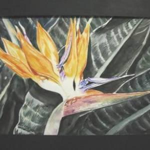 'Bird of Paradise' in Watercolor - Art & Buff