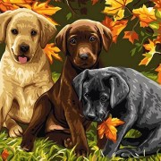paint-by-number-three-puppies
