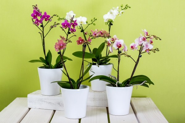 orchids 595242 1920