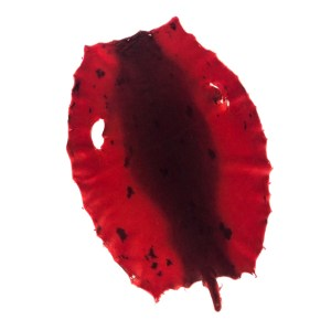 Bill Word Furs Red Dyed Seal