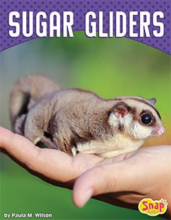 Sugar Gliders Colorado : sugar, gliders, colorado, Sugar, Gliders, Capstone, Library