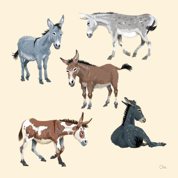 Carte artprint ânes