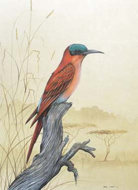 Carmine Bee-Eater A4 (Medium) embroidery panel, ready to embroider