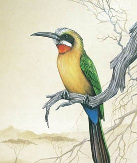 White Fronted Bee-Eater A3 (Large) embroidery panel