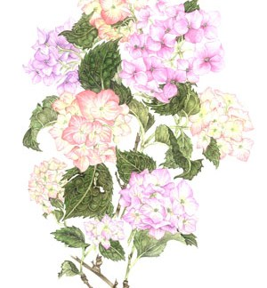Pink Hydrangeas A4 (Medium) embroidery panel, ready to embroider