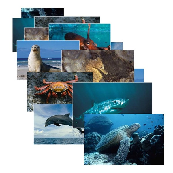 Sea Life 14 Poster Cards - Slm157 Stages Learning