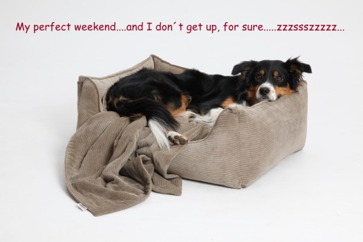 My perfect Weekend…and I don´t get up, for sure….! | DOGS in the CITY
