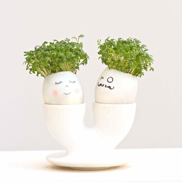 Picture of Spring Kids Club : Spring Sprout Project