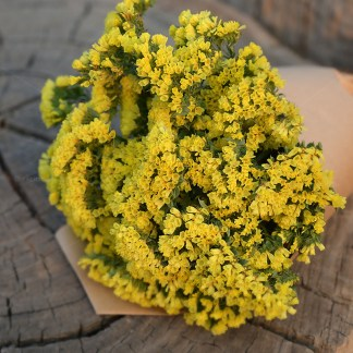 Bunch of gold coloured statice flower for Excitations online shop. Cut Flowers.