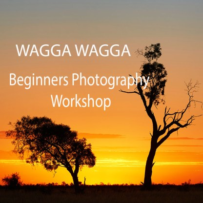 Advertising sunset photo of two trees for Wagga Wagga Beginners Photography Workshop
