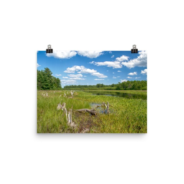 Grafton Woods Kejimkujik National Park photo print