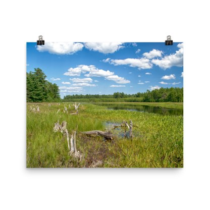 Grafton Woods Kejimkujik National Park photo print