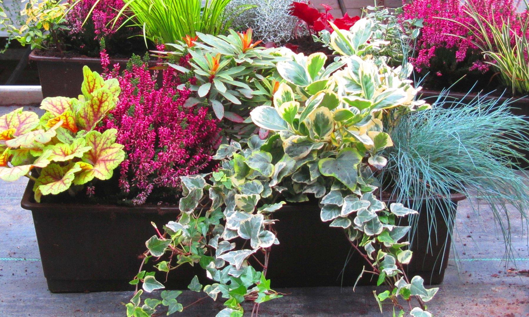 Balkonpflanzen Schatten Blumen Fur Den Balkon Im Schatten Bluhen