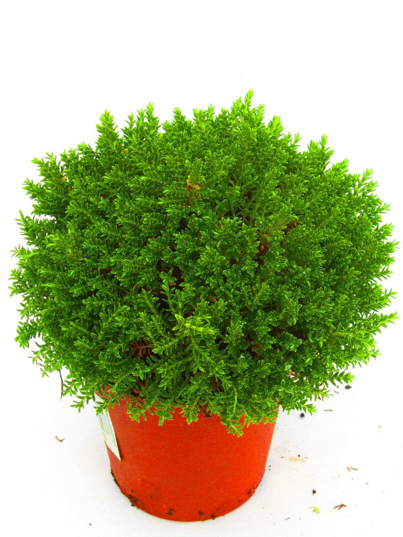 Balkonpflanzen Winterhart Sonnig Balkonpflanzen Alles Wichtige Auf