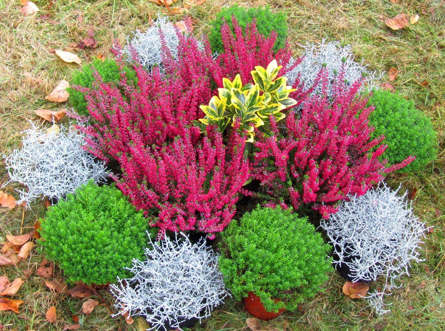 Grabbepflanzung Einzelgrab Wechselbepflanzung Herbst  Winter Versand Harros Pflanzenwelt