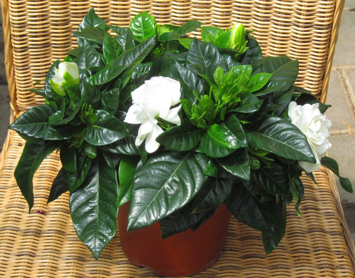 Zimmerpflanzen Schatten Schatten Zimmerpflanzen Produkte