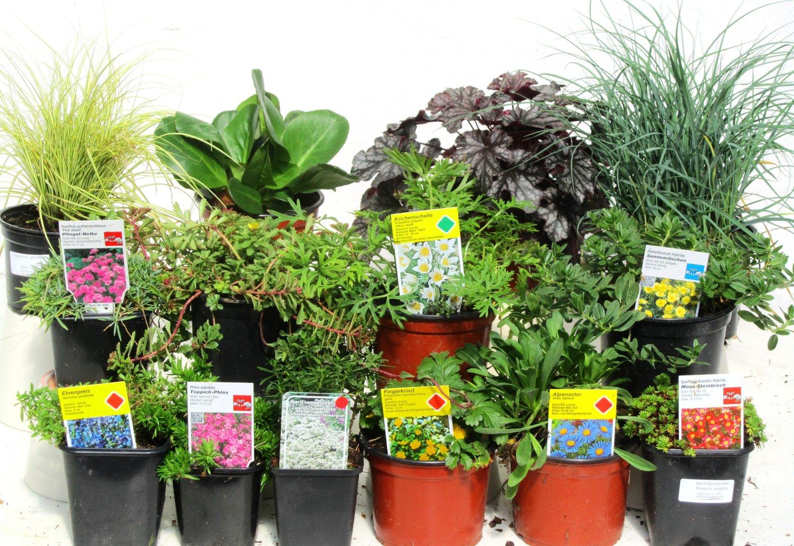 Pflanzen Set fr Steingrten ca 5 m  Pflanzen Versand