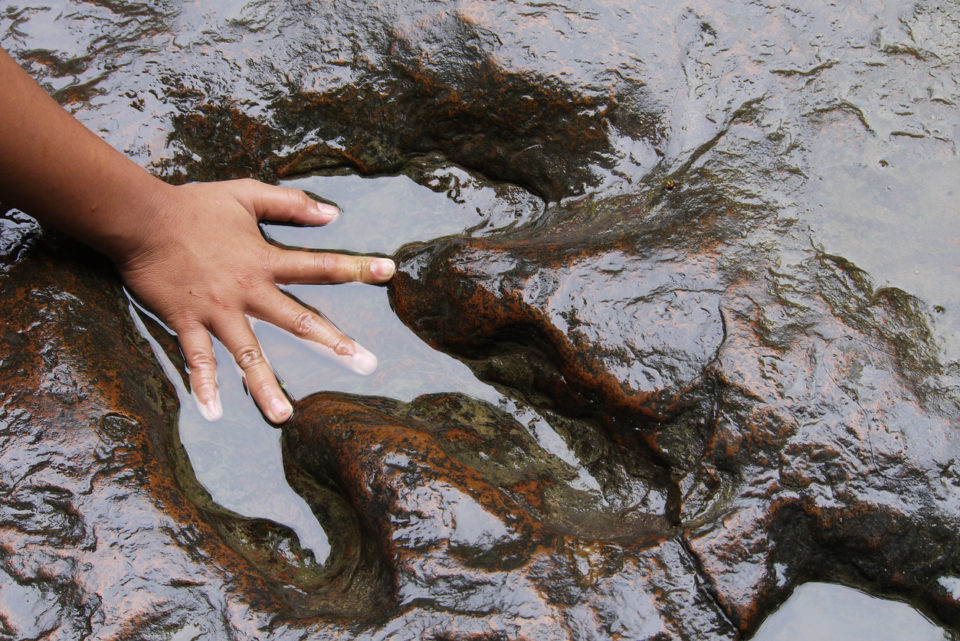 A child's hand touching a dinosaur track at a science museum