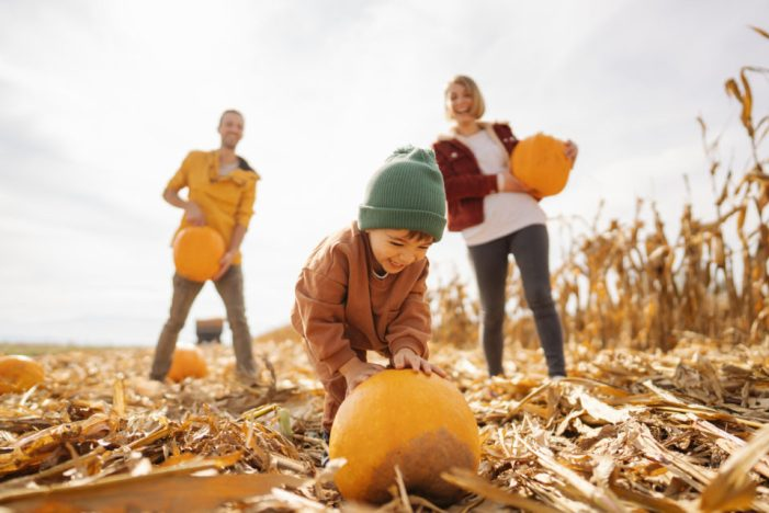 Picking pumpkins with dad and mom