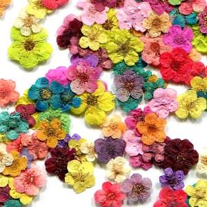Echte Blumen & Blätter